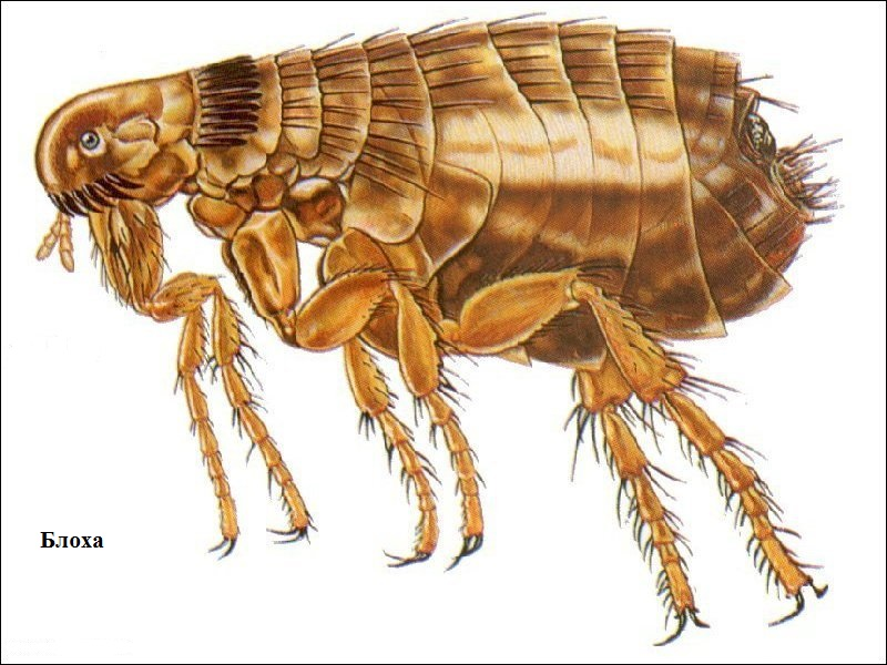 бактиформ от паразитов