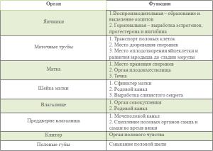 Функции половых органов самки