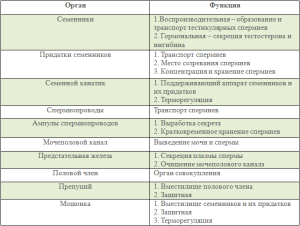 Функции половых органов самца